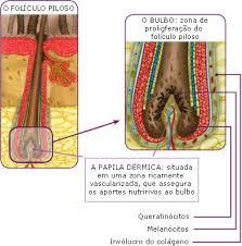 bulbo capilar