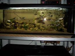 120l aquarium