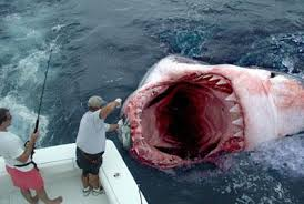 megalodon sightings