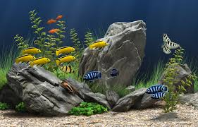screensavers aquariums