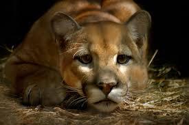 endangered animals rainforests