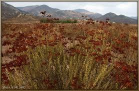 native american plants
