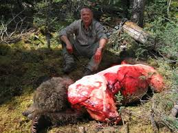 grizzly hunt