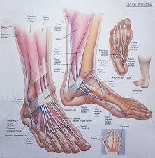 foot anatomy chart