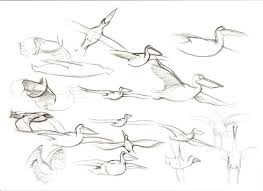 drawings of birds flying
