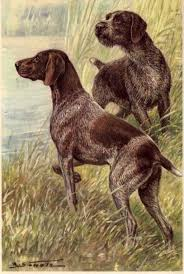 german pointers dogs