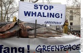 greenpeace whaling