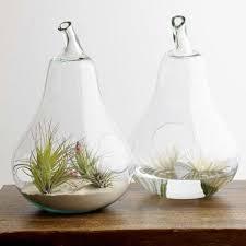 decorative terrariums
