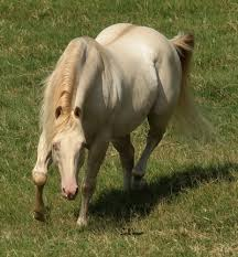horse moving