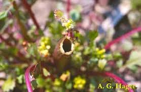 hollow stem