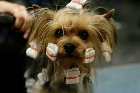 dog hair styles