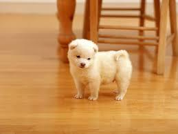 little puppy dogs
