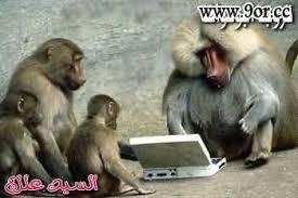 قردة هندية تستخدم الكمبيوتر Sakerah%2520(25)