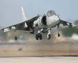 harrier pictures