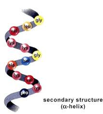 secondary structure of protein