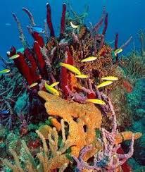 bahamas reefs
