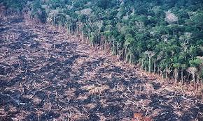 deforestation tropical rainforests