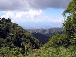 blue mountain jamaican