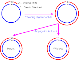 site directed mutagenesis