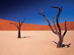 desert african