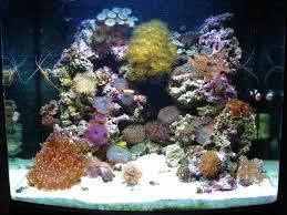 coral fish tanks