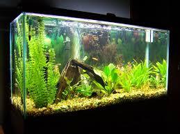 aquariums fresh water