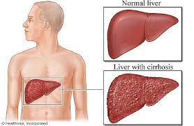 location of liver in body