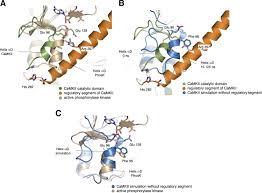 kinase atp