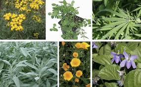 kinds of herbal plants