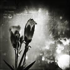 art photos black and white