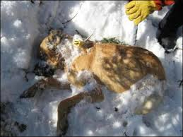 dogs death