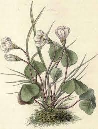 plant renders
