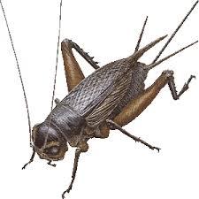 cricket clip arts