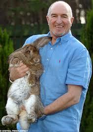 pet bunny rabbits