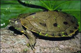 reptile pictures
