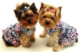 cute dog dress
