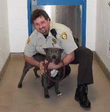 police animal
