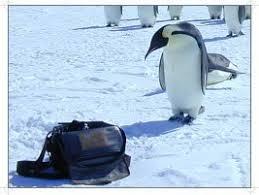 penguin cameras