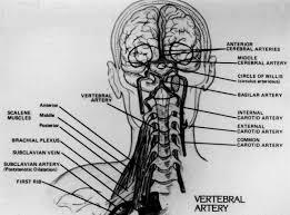 musculo escaleno