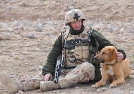 explosive detection dog