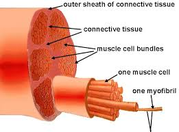 body muscle parts