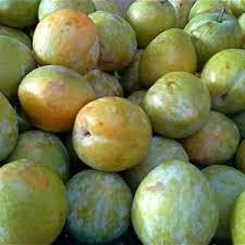 chinese plum