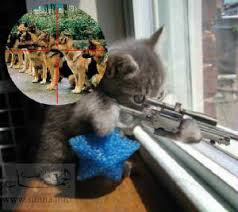 funny cats images