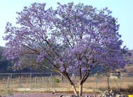 flowered tree