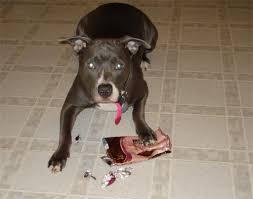 dog chocolates
