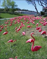 pink plastic flamingoes