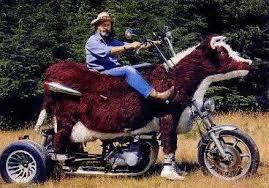cow bike