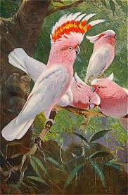 leadbeater cockatoo