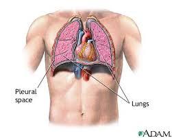 heart lung diagram