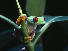 frog desktop background
